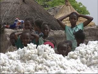 1.000 tonnes de coton bio africain pour l'industrie textile en France