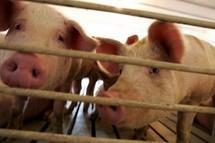La grippe A/H1N1 va se propager dans l'hémisphère sud, selon les CDC