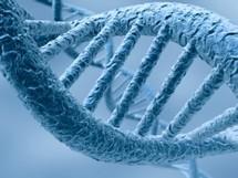 L'ADN d'un homme vivant voici 4.000 ans au Groënland a livré ses secrets