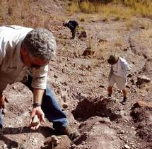Des vieux cousins des dinosaures exhumés en Tanzanie