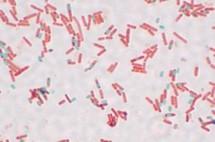Les Japonais ont des bactéries qui les aident à digérer les sushis