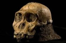 Un hominidé inconnu révèle une nouvelle étape de l'évolution humaine