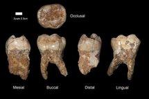 Des restes d'un Homo sapiens de 400.000 ans découverts en Israël