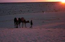 """Le secret de la """"bactérie du désert"""": se caler sur le cycle de l'eau"""
