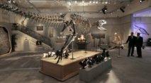 Les dinosaures, reptiles à sang chaud ?