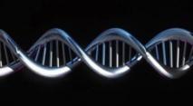 L'ADN donne des couleurs à l'Histoire