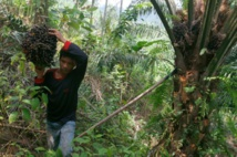L'Indonésie s'attaque à l'huile de palme après les gigantesques feux de forêts