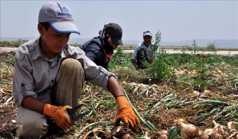 Plus de 160 millions d'enfants dans le monde forcés à travailler