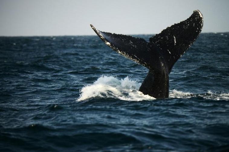Canada: cinq morts et un disparu dans le naufrage d'un bateau d'observation des baleines