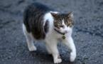 Singapour: en prison pour avoir jeté une chatte du 10e étage