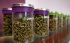 Le marché du cannabis en pleine croissance aux Etats-Unis