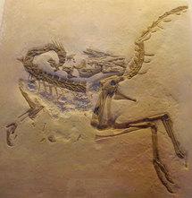 Un dinosaure inconnu découvert en Yakoutie