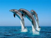 Quand les dauphins décident d'en finir avec la vie