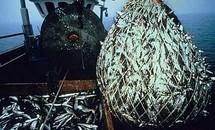Surpêche: les recommandations des scientifiques restent largement ignorées