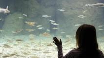 Suisse: Ouverture du plus grand aquarium-vivarium européen à Lausanne