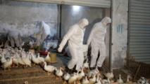 Tunisie/grippe aviaire : 45 décès depuis le début de la saison hivernale