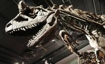 """Un """"paléothermomètre"""" pour déterminer la température des dinosaures"""