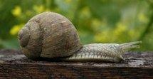 Une grand-mère distinguée par la BBC pour ses recherches sur les escargots