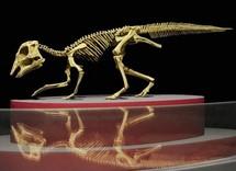 Les dinosaures étaient plus grands qu'estimé, selon une étude