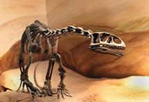 De petites empreintes découvertes près d'un ancien nid de dinosaures