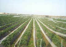 Vers une redynamisation du secteur agricole marocain : le cas du pôle agro-industriel de Berkane