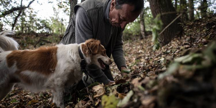 """En Italie, les chiens truffiers ont leur propre """"université"""""""