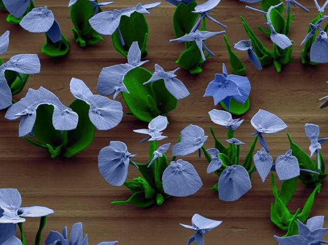Nanotechnologie – Des Nano-Fleurs cultivées en laboratoire