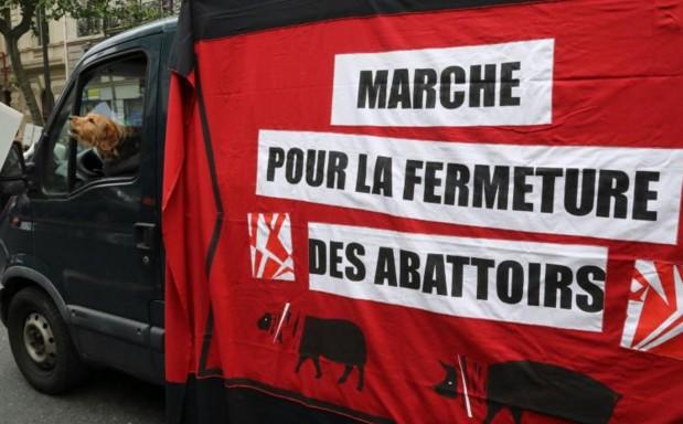 Une association de défense des animaux publie une vidéo dénonçant deux abattoirs du sud de la France
