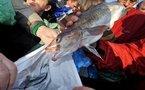 Pêche : l'Europe s'attaque au gaspillage du poisson en mer