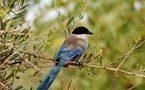 Les oiseaux, baromètre du réchauffement en Europe