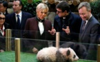 Le bébé panda chinois du Zoo de Beauval baptisé Yuan Meng