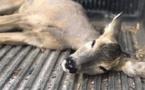 Turquie: Un jeune chevreuil, empêtré dans la boue, sauvé par des villageois