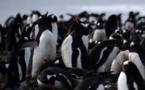 Cinq choses à savoir sur la faune en Antarctique